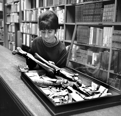 A librarian in Llandudno library examines some of the bones from Kendrick's cave on the Great Orme, LLandudno.  1960's.