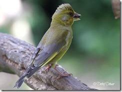 gruenfink01
