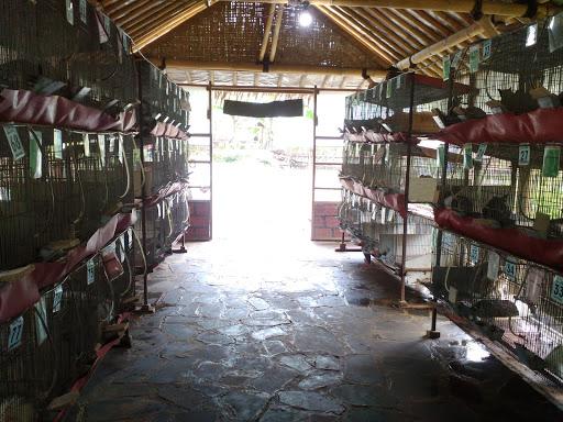 Bhumi Merapi Yogyakarta