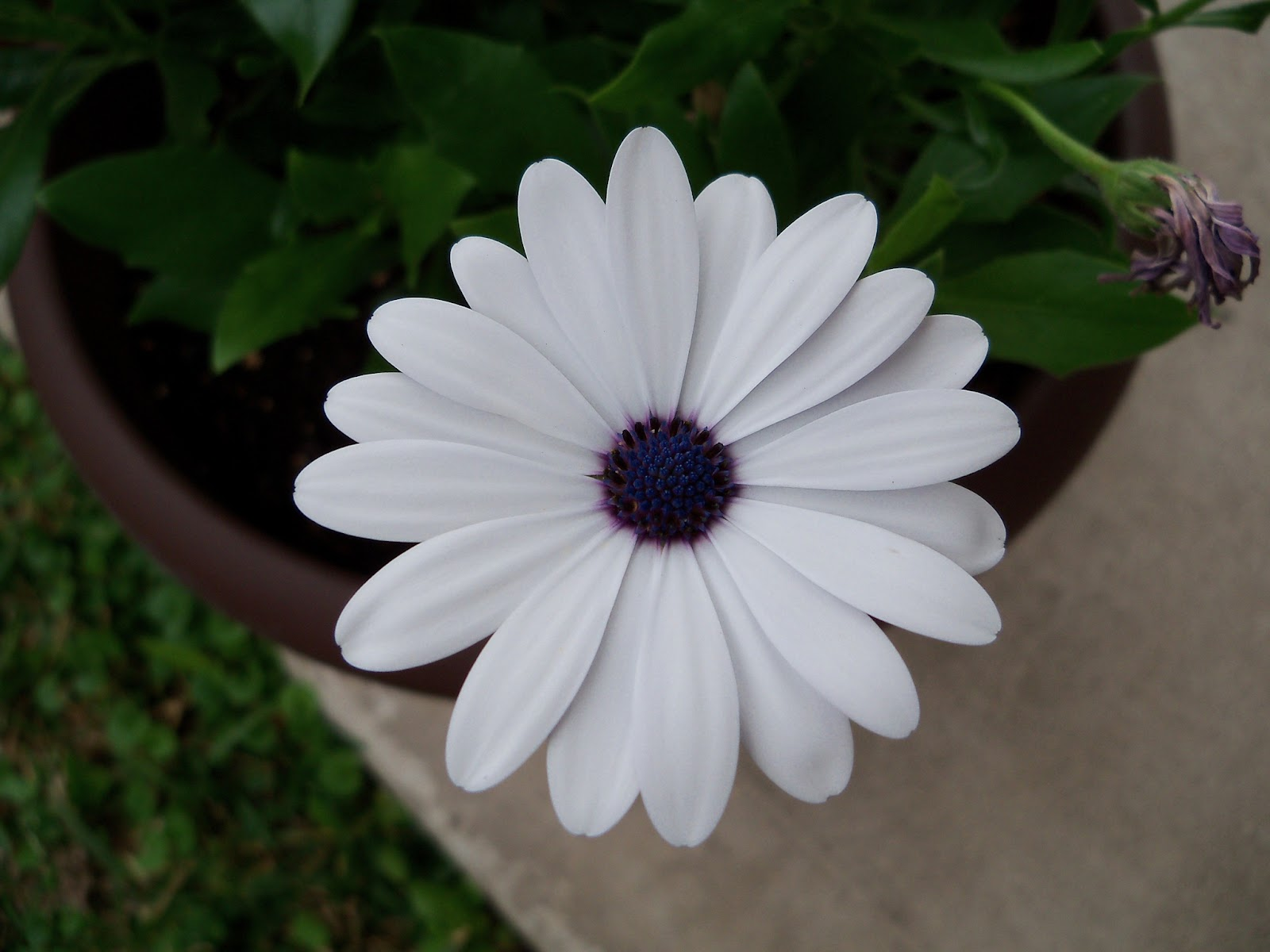 Gardening 2011 - 100_7221.JPG