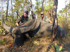 Mr Vorderwisch with another buffalo. This old bull took off into the bush after solid shoulder shot. He ran no less than 500 metres with a fatal wound.