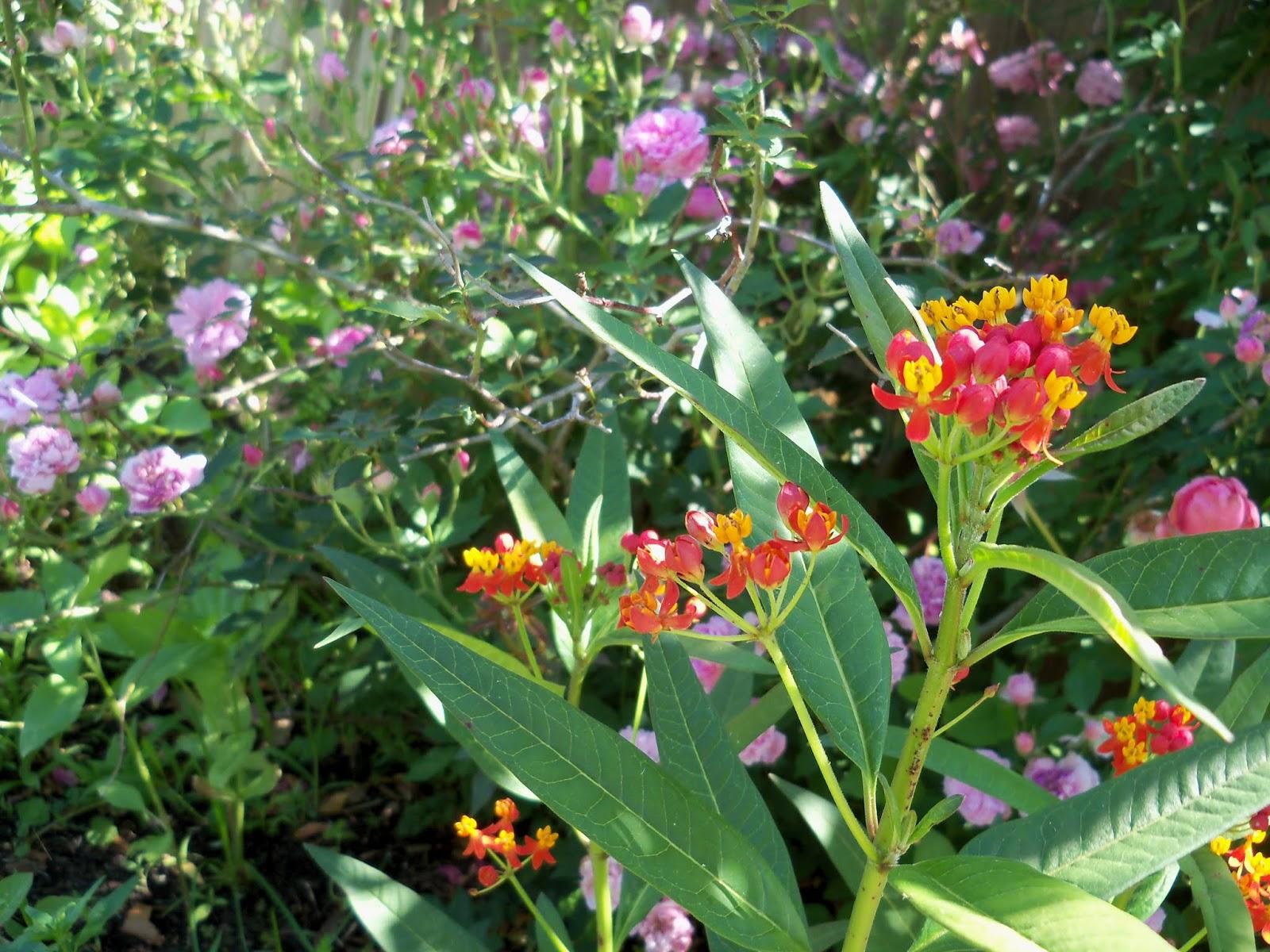 Gardening 2013 - 115_6228.JPG