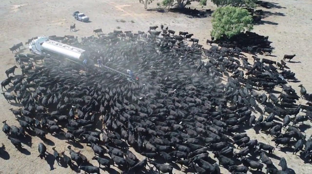 Aerial view of hundreds of cows gathering around a water truck amid a crippling drought in New South Wales, Australia, 3 August 2018. Amber Lea / Burrabogie Livestock and Contracting / Facebook