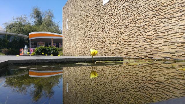 Foto de flor de loto reflejándose sobre un estanque, imagen bastante nítida
