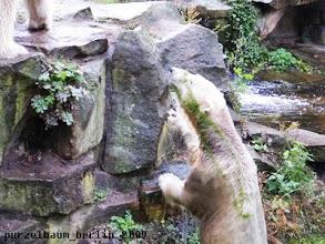 Photo: Hm, will der gruen-weisse Feger nicht ins Wasser ?