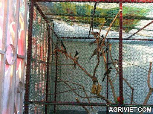 Agriviet.Com-IMG_0056_zpsced48409.jpg