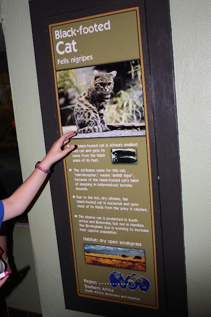 Zoo Snooze 2015 - IMG_7211.JPG