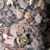 Gardening 2014 - 116_1990.JPG