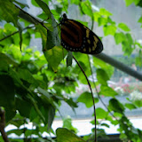 Houston Museum of Natural Science - 116_2892.JPG
