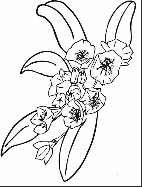 Magnificent Printable Flower Coloring Pages With Printable Flower Coloring  Pages And Printable Hawaiian Flower Coloring Pages
