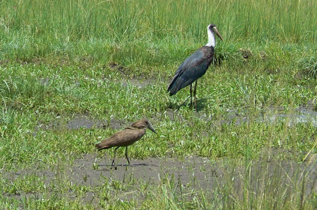 Serengeti National Park - birds
