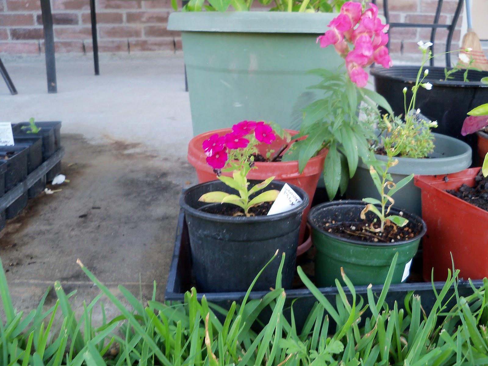 Gardening 2012 - 115_2608.JPG