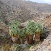 palm-canyon-69.jpg