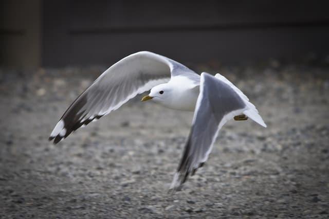 Seagull 3877263 640