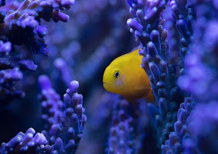 Θανατηφόρα νόσος των κοραλλιών σαρώνει την Καραϊβική και συνδέεται με λύματα από τα πλοία