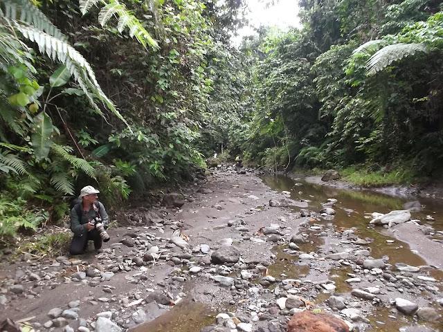 Halmahera (Moluques), 16 septembre 2013. Photo : Eko Harwanto