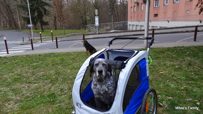 Modes de transport pour petits / vieux chiens qui fatiguent vite - Page 3 DSC02419