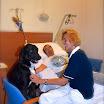20 Ciko durante una seduta di pet therapy.jpg