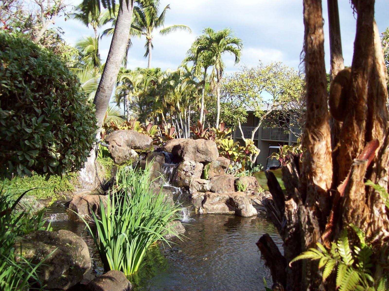 Hawaii Day 6 - 100_7601.JPG