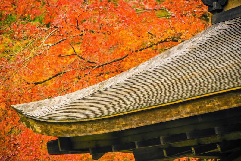 京都 銀閣寺 紅葉 写真3