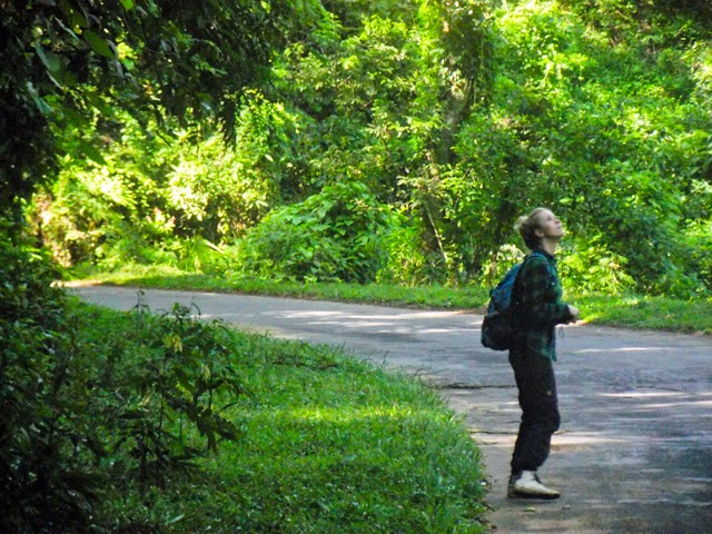 Looking for wildlife at Lawachhara National Park