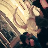 Sv. Miklavžev večer v Škofji Loki - Vika-8846.jpg