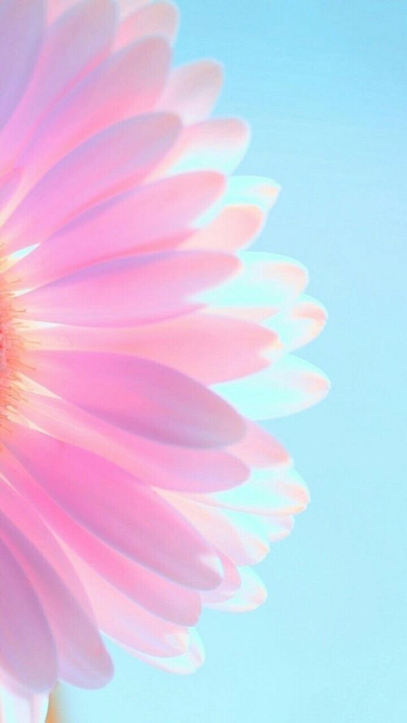 Iphone And Android Wallpapers Pastel Flower Iphone Wallpaper