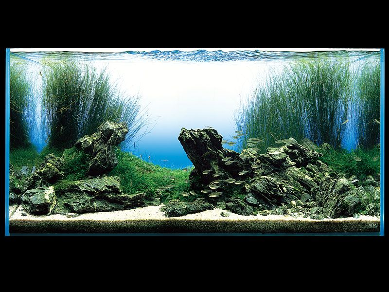 Aquaria by kt9742 on pinterest aquascaping freshwater for Google fish tank mrdoob