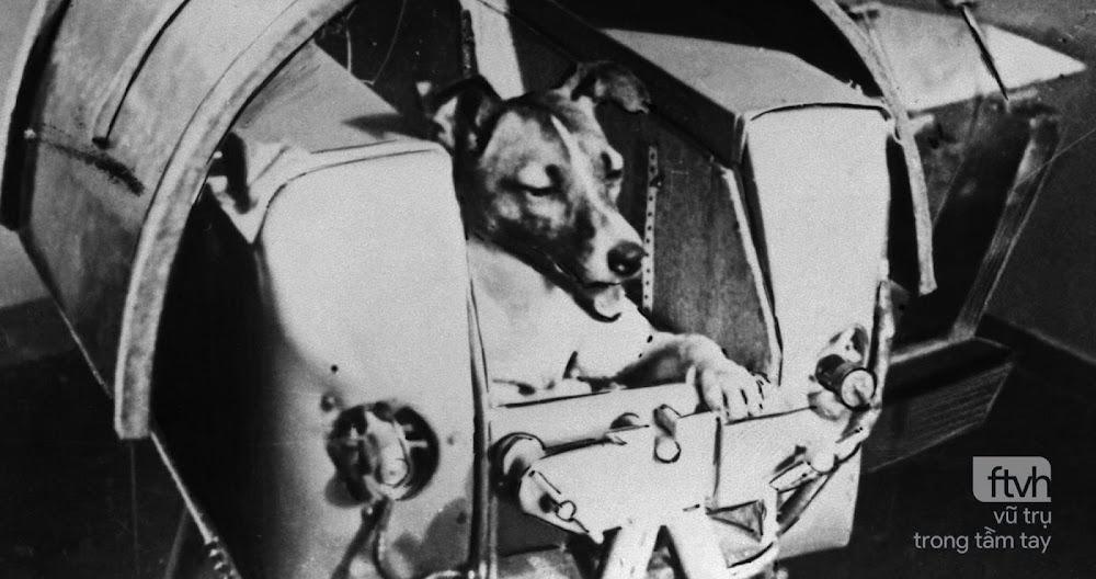 Ngày này năm xưa: Liên Xô đưa chó Laika lên quỹ đạo Trái Đất