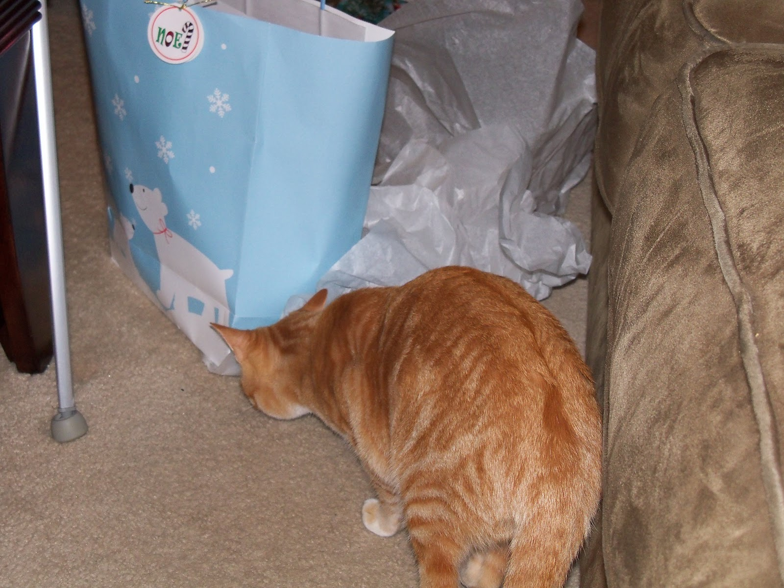 Christmas 2010 - 100_6448.JPG