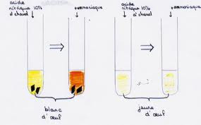 شرح التفاعلات اللونية الكاشفة عن البروتين images.jpeg