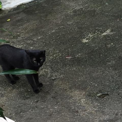 黒猫ニャー