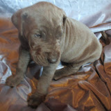 Tolly boy @ 4 weeks