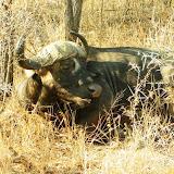 Dernier jour au Kruger