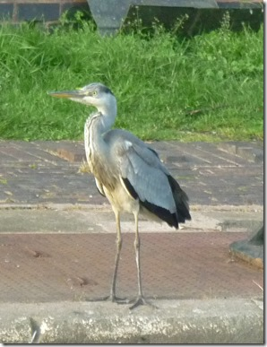 16 heron at top lock