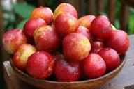 manfaat plum merah untuk ibu hamil