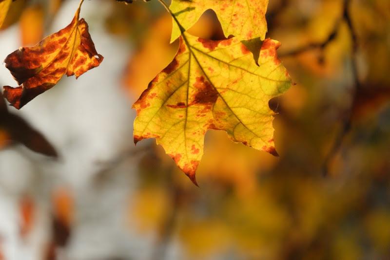 riflessi d'autunno di simo75