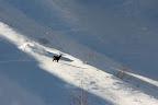 DANS LA LUMIERE   Chamois dans les Aravis, suite aux premières neiges de l'hiver 2013-2014