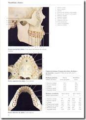 052 Mand_bula e Dentes