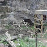Zoo Snooze 2015 - IMG_7182.JPG