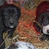 Graysee & Jaspers 1/27/12 Litter - SAM_2399.JPG