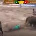 Vídeo: Vaqueiro morre pisoteado após puxar rabo de touro bravo que o arrasta em vaquejada