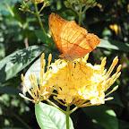 In the butterfly park (Kuala Lumpur)