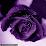 ha khiem's profile photo
