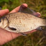 20140615_Fishing_Velikiy_Oleksyn_012.jpg