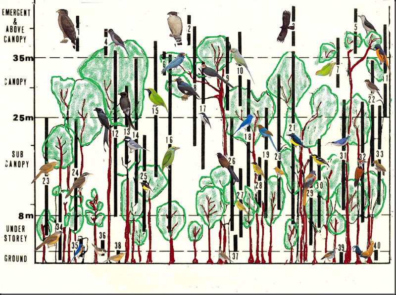 Birds in Forest paste copy