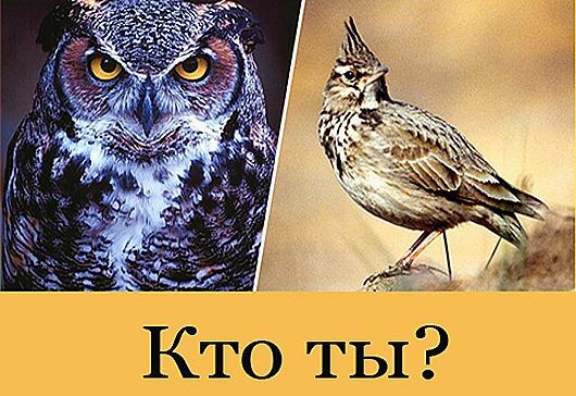 sova-ili-gavoronok_prevy1