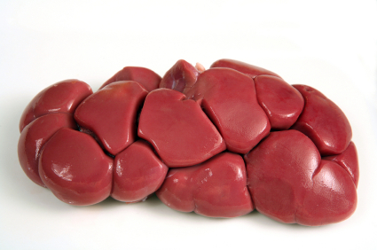 Best Meats For Dogs With Kidney Disease
