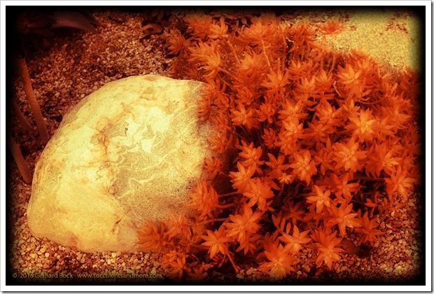 160101_PitzerCollege_0100
