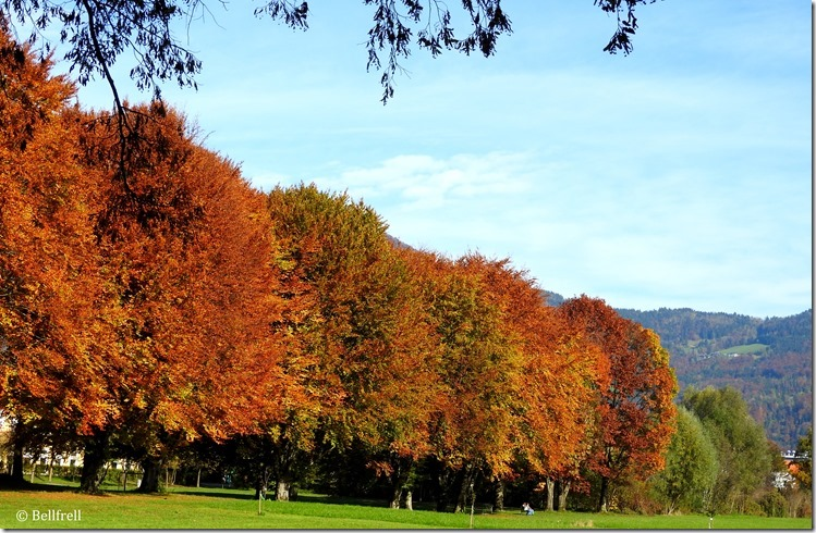 Frohnburg Bäume